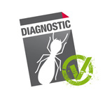 diagnostic termites - diagnostic immobilier