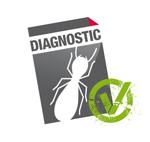 diagnostic termites - diagnostic immobilier